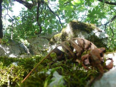 Balade en forêt 02